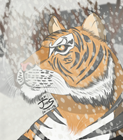 Tiger in the Snow by DinomanInc