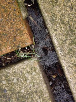 Cobweb in the pavement! by Bethy23