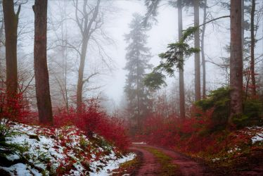 Bloodred Path by Aenea-Jones