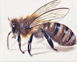 Bee by MadCalanchoe