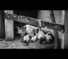 Urban Cats - 09 by MARX77