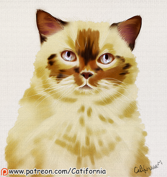Caturday Portrait (May 19th Edition) by Catifornia