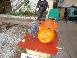 Derpcat Decoration and Jack-O-Lanterns. by hyenacub-stock