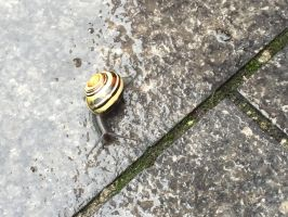 Snail in the Rain by MissIzzy