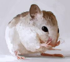 Mouse Study by Bawarner