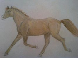 Galloping Horse by SpecialKaye94