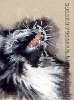 Cat's whiskers! by susysann