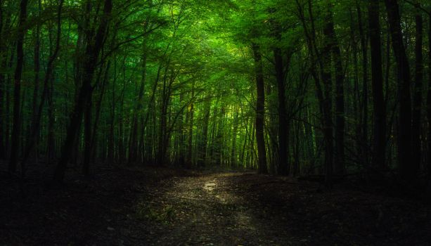 In the woods XIV by MoonKey19