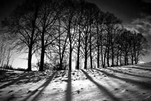 Winter Landscapes 05 by Mathadogg