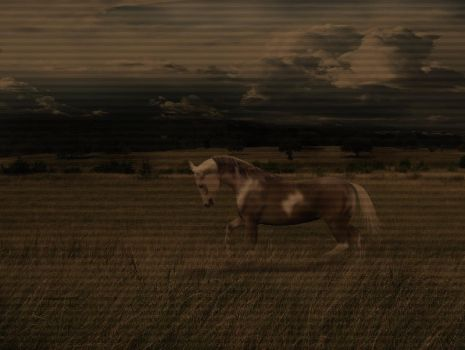 horse in field by limegraphix