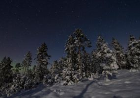 Moonlight forest by Antz0