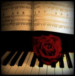 Rose on piano by Myzzety