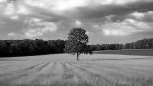 Lonesome Tree I by OliverBPhotography