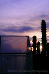 British Cacti Sunset by nighthawk663