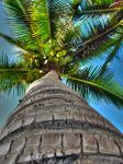 Palm HDR by DTherien