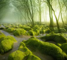 The Moss Swamp by borda