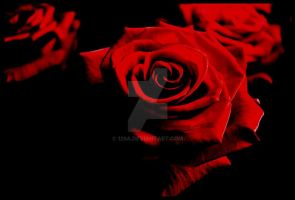 .roses. by 129a