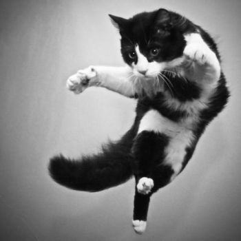 my flying cat by o-a-c
