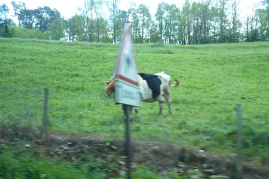 wrong cow loll by nicolapin