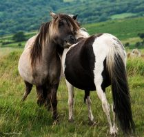 Mutual grooming by LordLJCornellPhotos
