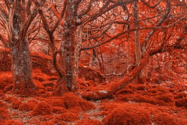 Ruby Moss Forest by somadjinn