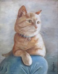 Dreamsicle Cat by Babsa
