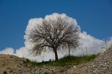 cloudtree by Sockrattes