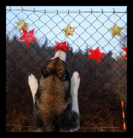 I'll catch Christmass by Pawkeye