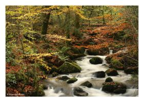 Autumn Vale by Kernow-Photography