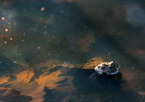bathing toad by tsigane