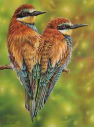 Bee Eaters by pamslaats