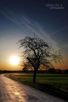 tree and sunset by directly
