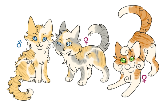 Juniperclan | Icesong's kitten CLOSED by Daisynner