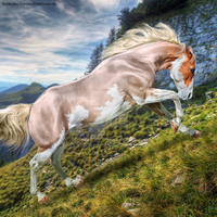 Horse Avatar   Akron by Liberty-Designs