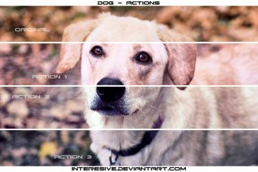 Dog - Actions by interesive