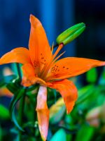 Pike place plant2 by Mackingster