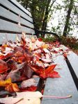 Bench covered in fallen leaves by Katrinanxdk