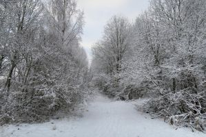 Winter forest 66 by MASYON