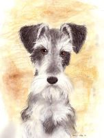 Severus Schnauzer by brewing-trouble
