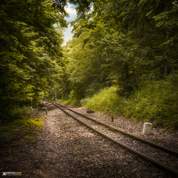 In search of the woodland train by piximi