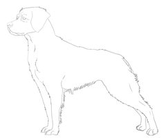 Brittany Spaniel Line-Art by DoggieDoodles
