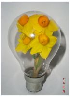 Daffodils Idea by Caen-N