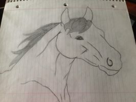 my first attempt at drawing a horse by iluvgrey