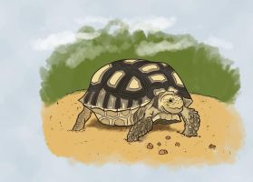 Oasis Turtle by TheHerdman