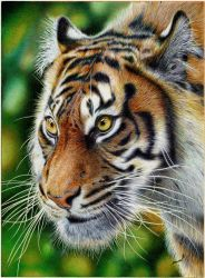 Glancing Tiger - Ballpoint Pen by VianaArts