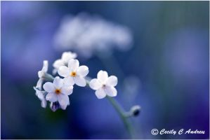 Purity by CecilyAndreuArtwork
