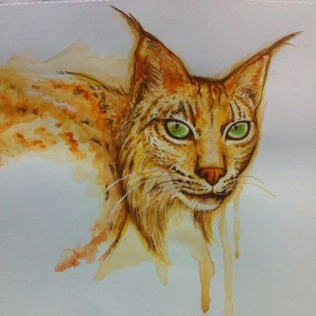 Linx watercolor by Tonig2