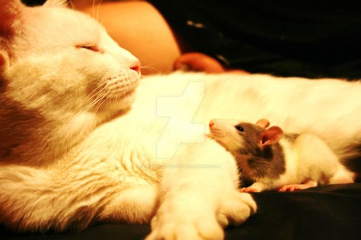 Cat and Rat by tazrafantastic