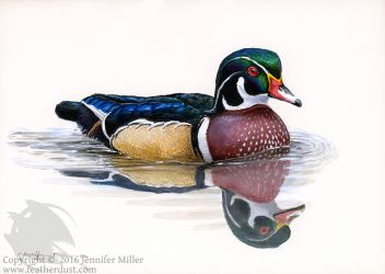 Little Wood Duck 2 by Nambroth