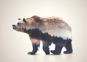 Bear Double Exposure by Alex-View